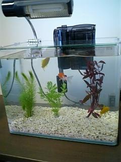 2006.12.25 金魚.jpg